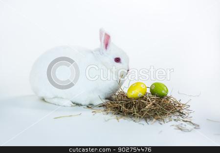 White bunny beside nest of easter eggs stock photo, White bunny beside nest of easter eggs on white background by Wavebreak Media