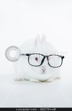 White bunny wearing human glasses stock photo, White bunny wearing human glasses on white background by Wavebreak Media