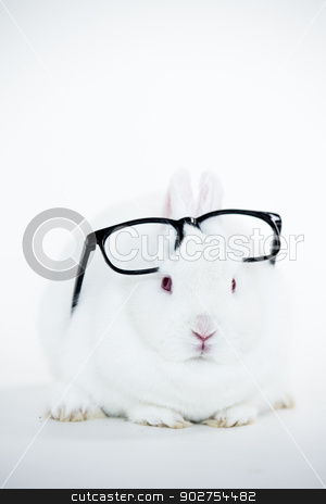 White bunny wearing human glasses on its head stock photo, White bunny wearing human glasses on its head on white background by Wavebreak Media