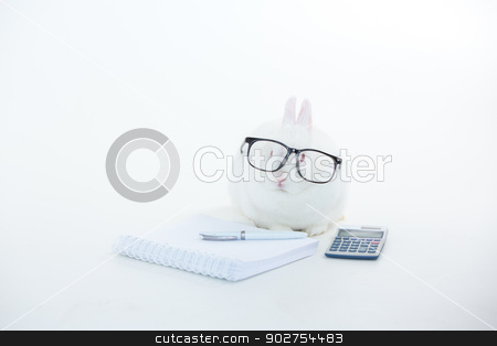 White bunny wearing human glasses with stationary and calculator stock photo, White bunny wearing human glasses with stationary and calculator on white background by Wavebreak Media