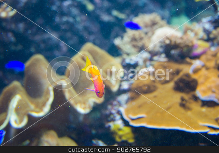 Tropical fish under the water  stock photo, Tropical fish under the water  by Elnur