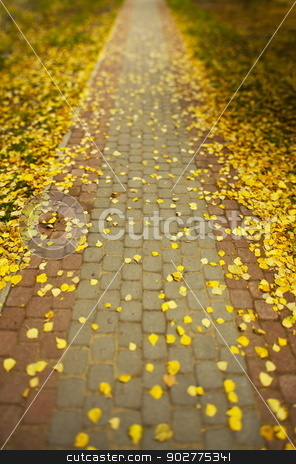 Autumn stock photo, A walking path strewn with fallen leaves away into the distance by mrivserg