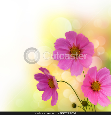 Abstract violet flowers border over white for your design stock photo, Abstract violet flowers border over white for your design by tolokonov