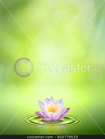 Water lily. Abstract oriental backgrounds for your design stock photo, Water lily. Abstract oriental backgrounds for your design by tolokonov