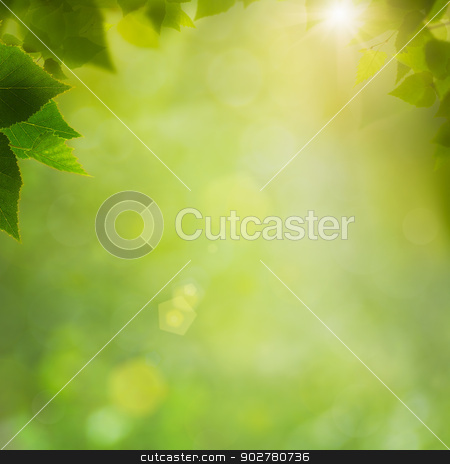 Summer in the forest, abstract natural backgrounds with fresh fo stock photo, Summer in the forest, abstract natural backgrounds with fresh foliage and bokeh by tolokonov
