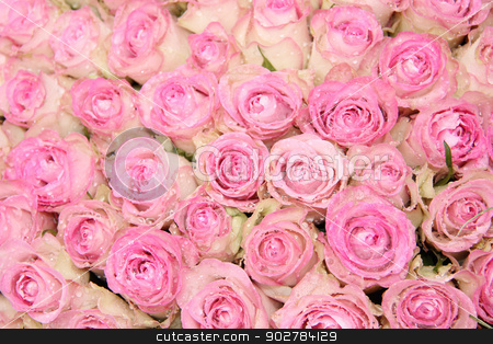 Pink roses in a group stock photo, Group of pink roses and waterdrops, part of a floral wedding arrangement by Porto Sabbia