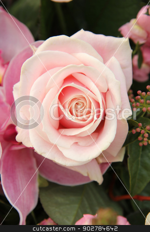 pink rose and orchid in bridal bouquet stock photo, Soft pink rose and orchid in a bridal bouquet by Porto Sabbia
