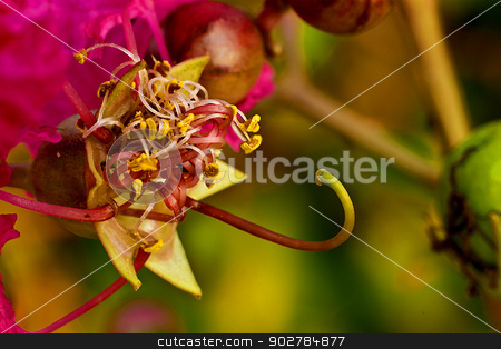 macro stock photo, extreme close up of flower by andrew33