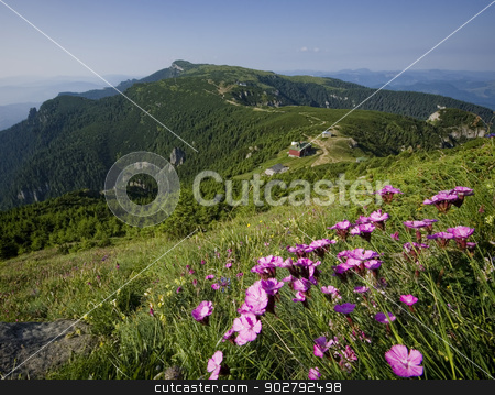 flowers on mountain stock photo, Romanian landscape in Carpathians. summer view by Ioan Panaite