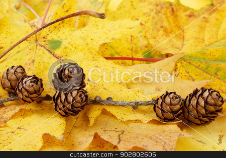 pine cones background stock photo, small pine cones and yellow maple leaves by Artush
