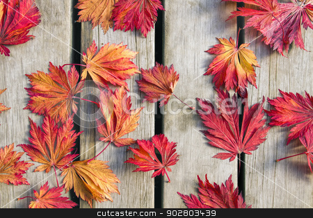 Japanese Maple Tree Leaves on Wood Deck stock photo, Japanese Maple Tree Leaves on Wood Deck Background in Fall Season by Thye Gn