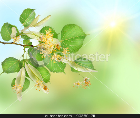 Background of a linden garden stock photo, Abstract background of a linden garden with sun beams by Givaga