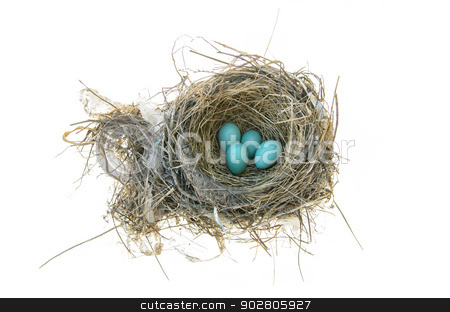 Robins Bird Nest stock photo, Robins nest with 4 eggs in it. Isolated on a white background by Richard Nelson