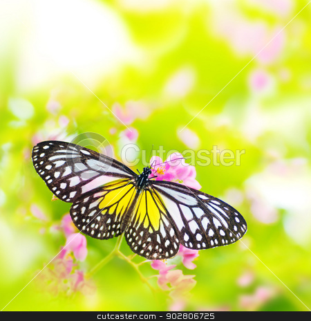Butterfly on flower stock photo, Butterfly. Parantica aspasia (Yellow Glassy Tiger) feeding on flower. by szefei