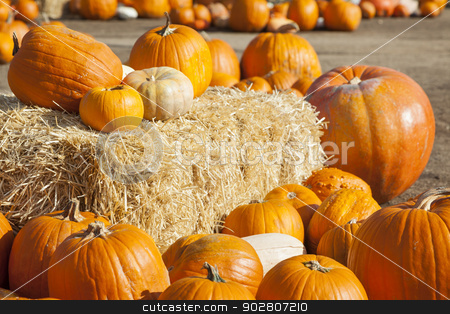 Fresh Orange Pumpkins and Hay in Rustic Fall Setting stock photo, Fresh Orange Pumpkins and Hay in a Rustic Outdoor Fall Setting.  by Andy Dean