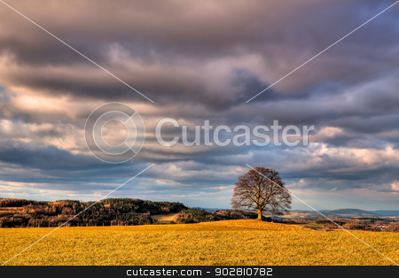Memorable oak  stock photo, Memorable oak on the autumn meadow in the daytime by CaptureLight