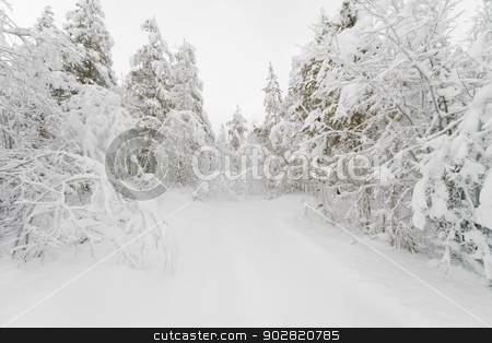 The path in a snowy winter forest stock photo, Footpath in a snowy winter forest by Alexey Romanov