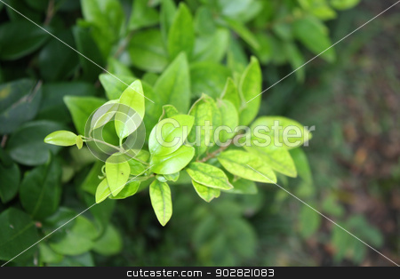 Leaves stock photo, green leaves taken in soft focus by Marburg