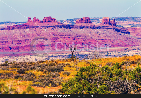 Dead Tree Yellow Grass Lands Moab Fault Arches National Park Moa stock photo, Dead Tree Colorful Yellow Grass Lands Red Moab Fault Windows Section Arches National Park Moab Utah USA Southwest.  by William Perry