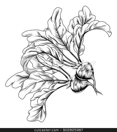 Vintage retro woodcut radish or beets stock vector clipart, A vintage retro woodcut print or etching style radish or beets illustration by Christos Georghiou