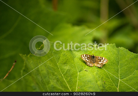 Butterfly on a leaf stock photo, Background picture with a butterfly on a leaf by Kasper Nymann