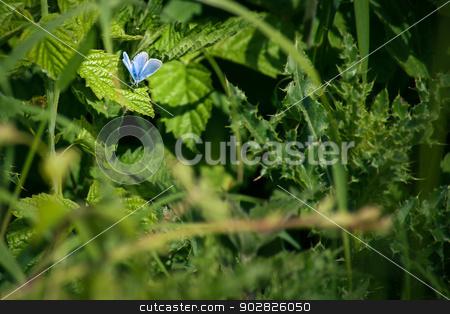 Blue butterfly on a leaf stock photo, Cute little butterfly in blue colors on a green leaf by Kasper Nymann