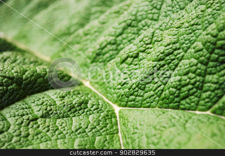Green Leaf stock photo, Close-up shot of a big green leaf. Selective focus. by Nils Prause