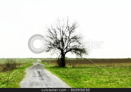 Simply Nature stock photo, Simply Nature by WDGPhoto