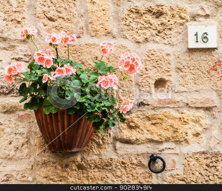 Tuscan flowers stock photo, Pienza, Tuscany region, Italy. Old wall with flowers by Paolo Gallo