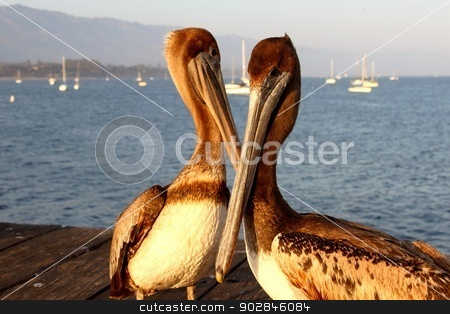 California Pelicans stock photo, Two California pelicans on the Santa Barbara pier. by Henrik Lehnerer