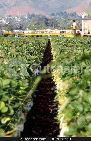 Strawberry Field stock photo, Strawberry Field with workers on a machine. by Henrik Lehnerer