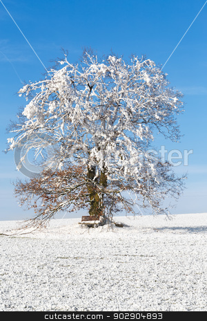 Nice winter landscape with tree and blue sky stock photo, Nice winter landscape with tree, bench and blue sky by Artush