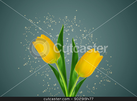 yellow spring tulips stock photo,  yellow spring tulips with water drops around by Designsstock