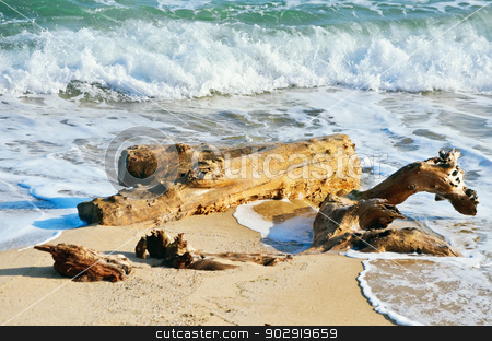 Trunk stock photo, Trunk Of Tree On The Beach Near The Sea by Sergej Razvodovskij