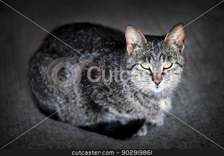 Grey cat portrait stock photo, Portrait of cute gray cat sitting on grey floor by Elena Elisseeva
