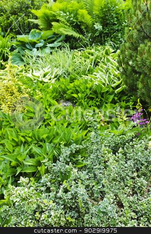 Green summer garden stock photo, Various shades of green foliage in lush summer garden by Elena Elisseeva