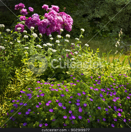 Summer garden stock photo, Beautiful summer garden with various plants and flowers blooming basking in sunshine by Elena Elisseeva