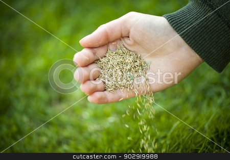 Hand planting grass seeds stock photo, Hand planting grass seed for overseeding green lawn care by Elena Elisseeva