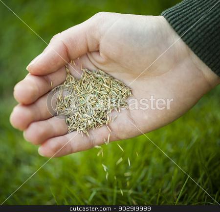 Hand planting grass seeds stock photo, Hand planting grass seed for overseeding green lawn care by Elena Elisseeva