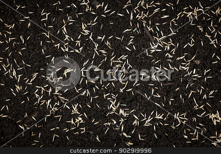 Grass seeds in soil stock photo, Grass seeds scattered on fertile soil from above by Elena Elisseeva