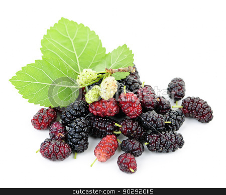 Fresh mulberries with leaves stock photo, Fresh ripe mulberry berries with leaves isolated on white background by Elena Elisseeva
