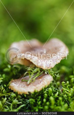 Wood mushrooms stock photo, Brown wood mushrooms growing on mossy green forest floor by Elena Elisseeva