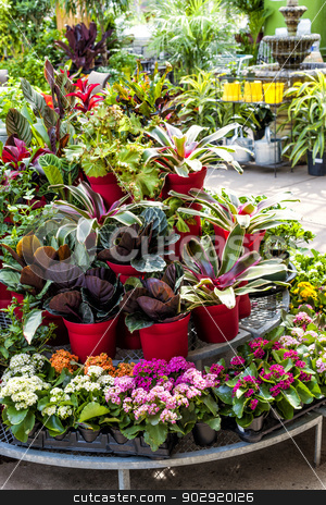 Plants for sale in nursery stock photo, Plant nursery store with many plants for sale on display rack by Elena Elisseeva
