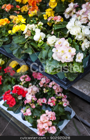 Flowers for sale in nursery stock photo, Trays of flowers for sale in plant nursery store by Elena Elisseeva