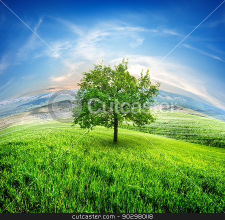 Meadows and tree stock photo, Field of fresh grass on a background of blue sky by Givaga