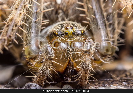Spider macro stock photo, Macro photography of a spider by Pedro Campos