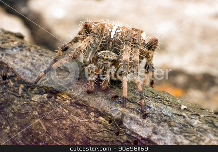 Spider stock photo, Spider facing camera on a trunk by Pedro Campos