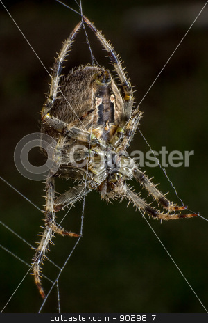 Spider on the web stock photo, Spider staring on its web by Pedro Campos