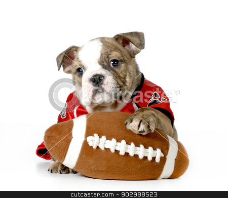 sports hound stock photo, sports hound by John McAllister