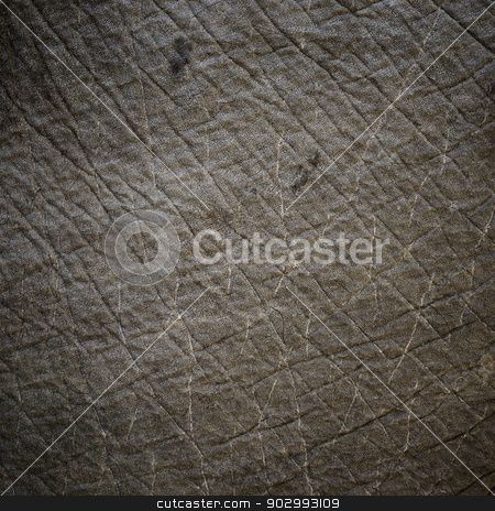 Elephant skin texture stock photo, Elephant skin texture with vignette by Dutourdumonde